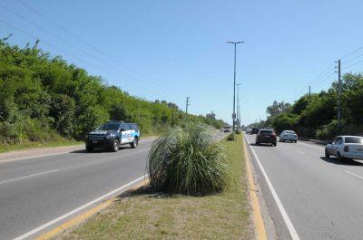 Avanza el Plan de Forestación en más accesos y espacios públicos