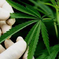 Amparo por cannabis medicinal