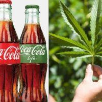 El nuevo posible mercado de Coca Cola: ¡con cannabis!