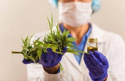 En tiempo récord Echarren legalizó el cultivo de marihuana en su municipio