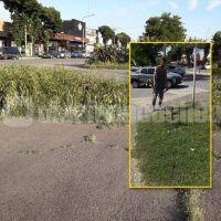 Ante la desidia municipal, vecinos de Necochea cortan el pasto por sus propios medios