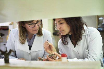 Científicos de La Plata desarrollan un fertilizante ecológico a partir de desechos de la industria yerbatera