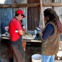 Detectan en la informalidad laboral a 8 trabajadores dedicados a la esquila en Santa Cruz