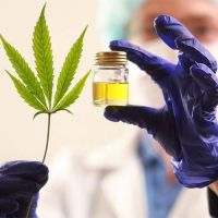 El 80% de los niños con epilepsia evita 2 de cada 3 crisis con aceite de cannabis