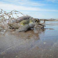 Más del 80% de los residuos que hay en las playas son plásticos