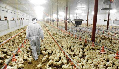 Trabajadores de la Carne sumaron 12% en revisión paritaria y abrochan 50% en el año