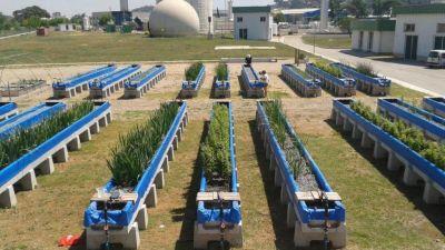 CONICET: comprueban la eficacia de un subproducto de la industria cervecera y el descarte de las podas para depurar el agua