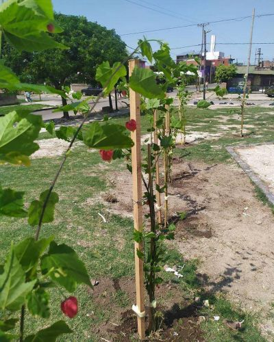 Eco Lomas: forestan más espacios públicos de distintos barrios