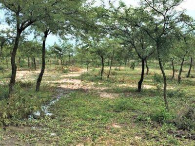 El gobierno del Chaco creará un Observatorio Ambiental