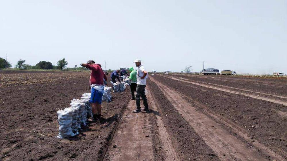 El 83 por ciento de los trabajadores rurales relevados en 2019 no estaba registrado