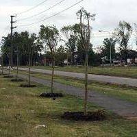 Tigre: El municipio plantó más de 1.500 árboles en todo el distrito
