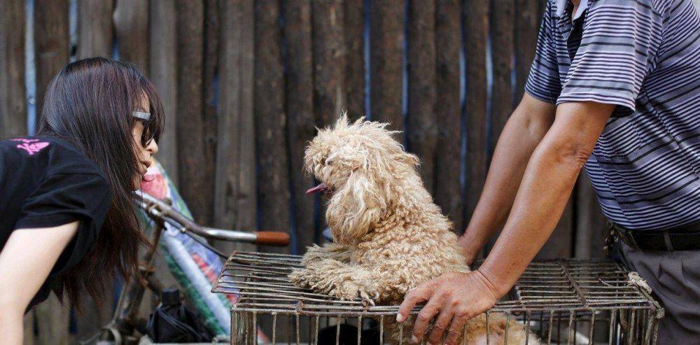Las mascotas, víctimas colaterales del coronavirus en China