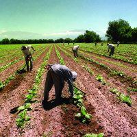 La OIT Argentina se sumó a red de promoción del empleo decente agropecuario