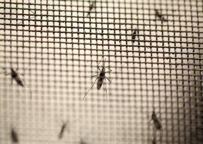 Crecen los casos de dengue y se confirma el primero en Mar del Plata