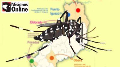 Infografía de la situación del dengue en Misiones: Oberá, Andresito e Iguazú son las localidades más afectadas