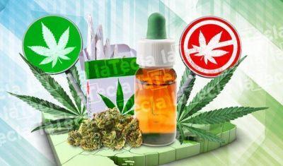 Cannabis: un debate que está verde