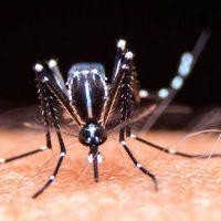 Dengue en La Rioja: 1102 casos confirmados y 1594 en estudio