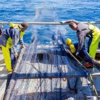 RepescaPlas aborda el reciclado químico de la basura marina para la obtención de combustible