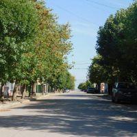 Por indicación de expertos no se realizará limpieza de calles y vehículos en Adolfo Alsina
