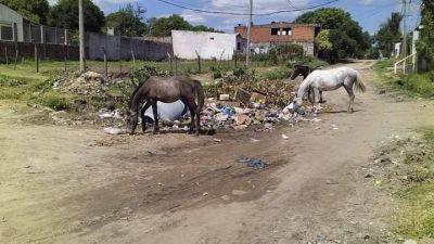 En plena pandemia, proliferan focos de basura en varios barrios