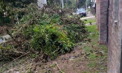 Reclaman al Municipio que realice la recolección de ramas en barrios