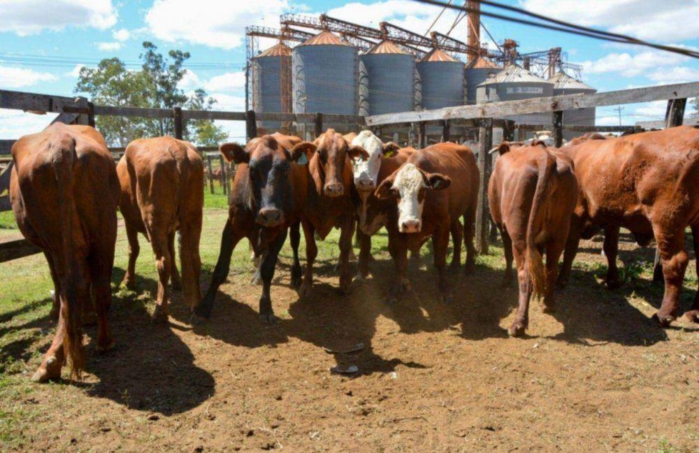 Las seis principales actividades productivas funcionan a pleno en Corrientes