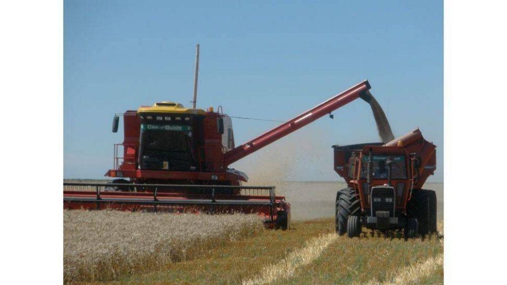 Cosecha récord de trigo garantiza fondos frescos para fin de año