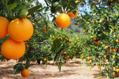 Coronavirus. Una firma tucumana exportará jugos para cubrir una demanda de vitamina C en China