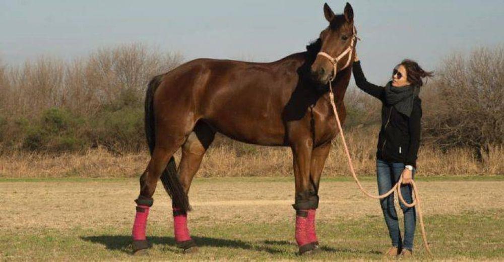 La conjunción del caballo con el ser humano como terapia es la noble tarea que pronto tendrá su espacio propio en Santa Inés