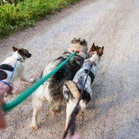 Los paseadores de perros quieren ser reconocidos como actividad esencial