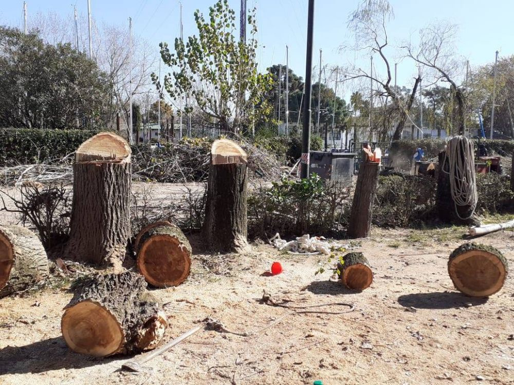 San Isidro: multan al Club Náutico Azoparto por poda y extracción clandestina de árboles