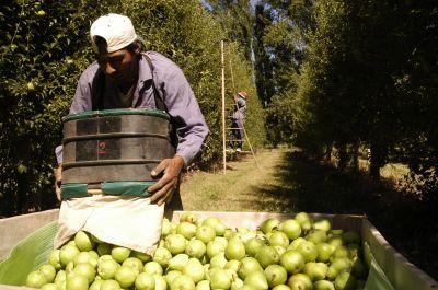 Pidieron formalmente la prórroga de la ley de emergencias para la producción de peras y manzanas