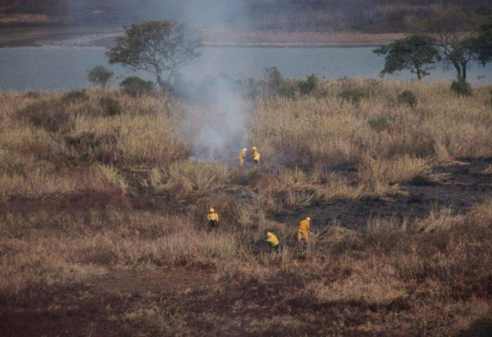 El detrás de los incendios en el Delta: negocio ganadero y desidia macrista