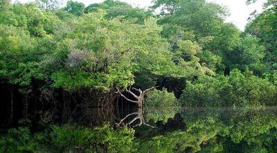 Crean Conferencia Eclesial de la Amazonía adscrita al CELAM