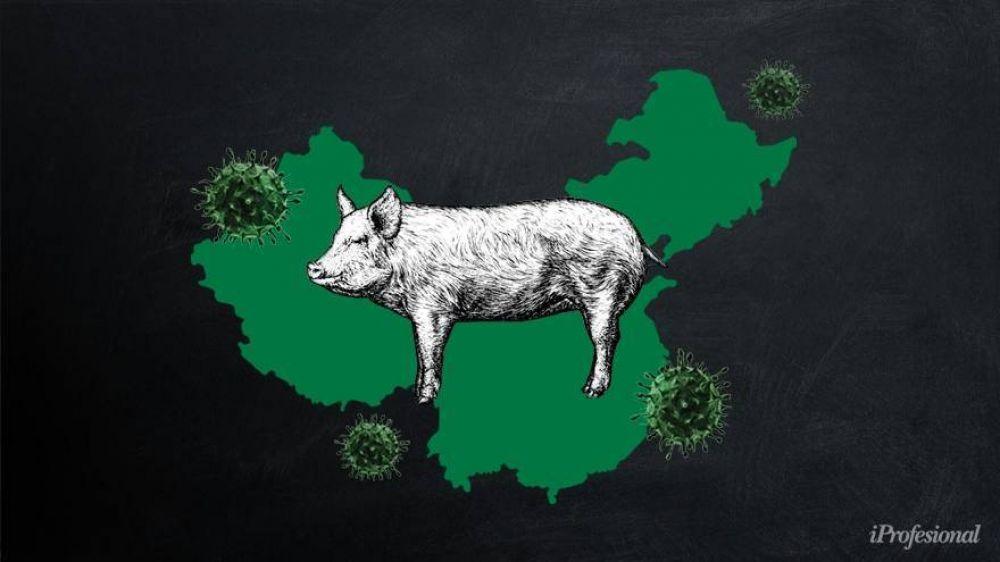 Nuevo virus que afecta a cerdos: ¿peligra la exportación de soja argentina al mercado asiático?