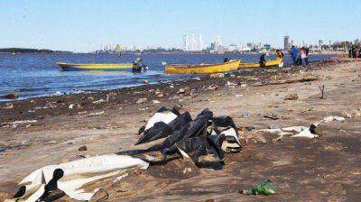La bajante del Paraná desnudó un basural en la costa norte rosarina