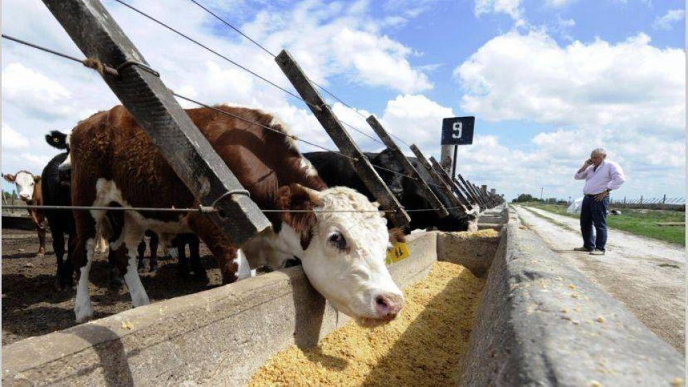El Gobierno detectó 62 mercados abiertos a los alimentos argentinos por la crisis del Covid-19