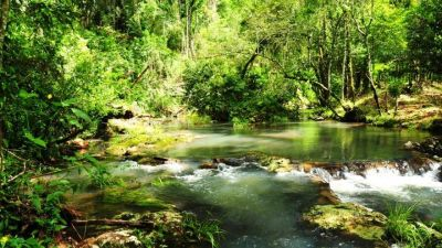 Misiones apuesta a la biodiversidad como clave para la recuperación económica en la nueva normalidad