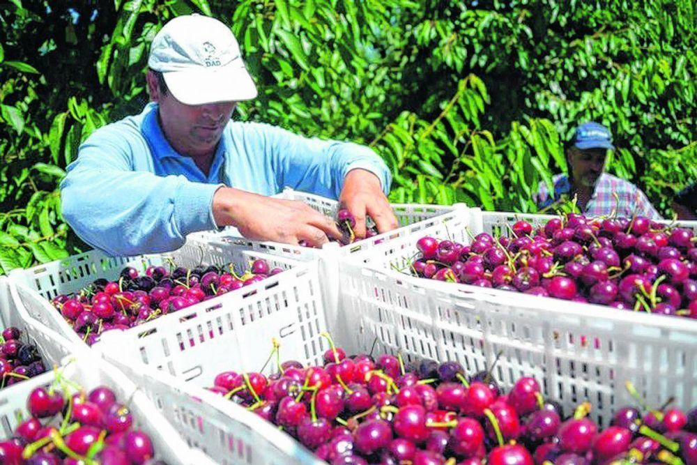 Por falta de fondos peligra el programa para el control de mosca de los frutos