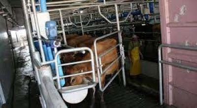 Industria lechera en tiempos de COVID 19
