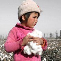 La OIT logró la ratificación universal del convenio sobre el trabajo infantil