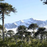 Chile: Obispos llaman al diálogo por la paz en Araucanía