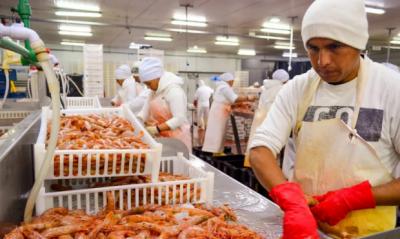 Comodoro: Peligra la temporada de langostino por la intransigencia patronal
