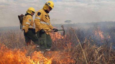 Fuego en el Delta del Paraná y humo en Buenos Aires: efectos de un desmonte que no cesa