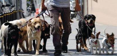 El Sindicato de Trabajadores Caninos reclamó la reapertura de los caniles en las plazas