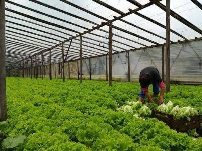 El consumo de nicho que se hizo masivo por la cuarentena: el boom de los bolsones de verdura agroecológica