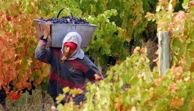 Paritarias: Acuerdan incremento salarial del 40% para trabajadores vitivinícolas
