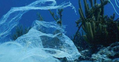 La basura de Coca y Pepsi de 12 países contamina mares de México en Áreas Protegidas, dice estudio