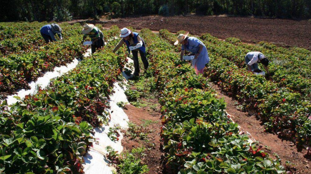 Alberto Fernández anunció un plan de inversiones para la agricultura familiar