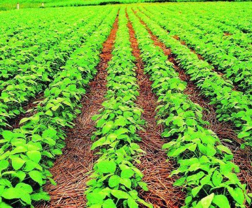 Desafío a Guzmán: dólares del agro podrían frenarse tras medidas del BCRA